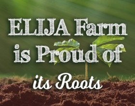 ELIJA Farm is Proud of its Roots
